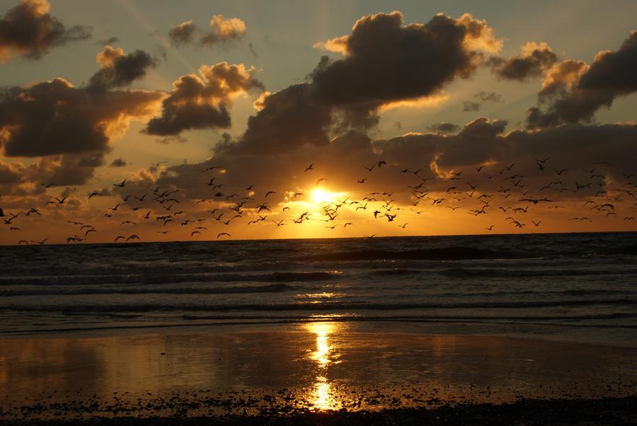 Zonsondergang Seinpost callantsoog. Vogels en vakantiehuisjes